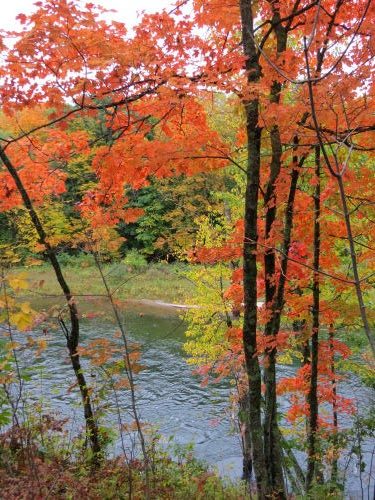 fall color and Manistee River