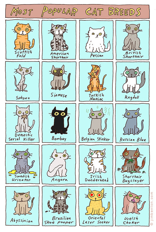 20 Most Popular Cat Breeds
