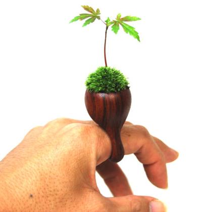 Fantásticos anillos de madera con plantas vivas!