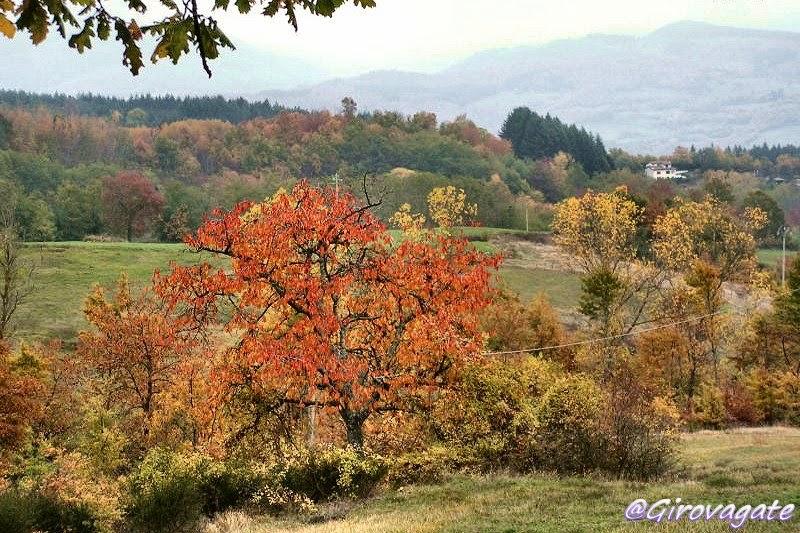 foliage autunno casentino