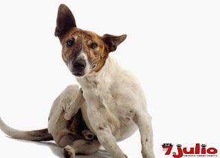 Causas que provocan picor en nuestras mascotas