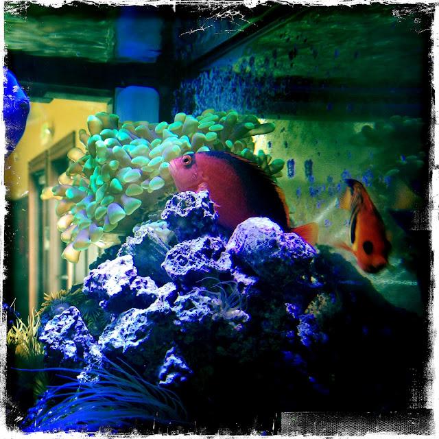 Image Result For  Gallon Aquarium