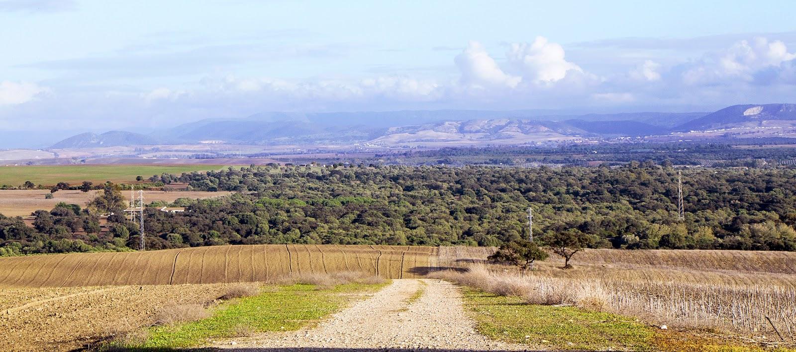 Entorno a jerez un paseo por la ca ada de cuartillos pinos centenarios y puertas singulares - El olivar de albarizas ...