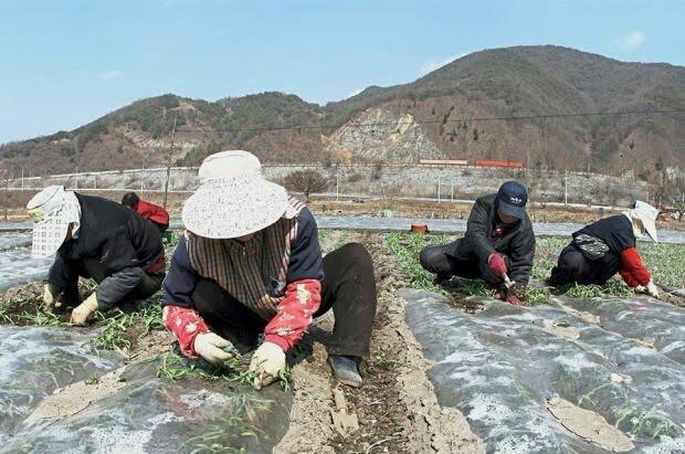pendatang haram di korea