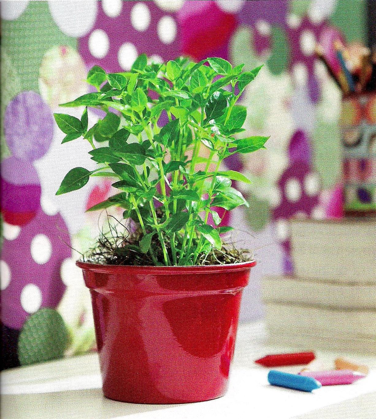 Talita Monteiro: Feng Shui: Plantas Poderosas #8B1B26 1226 1367