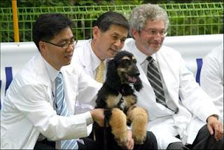 cachorros influentes