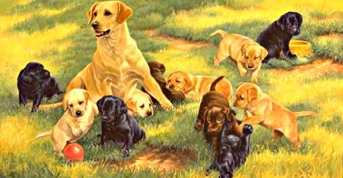 castration chien de garde