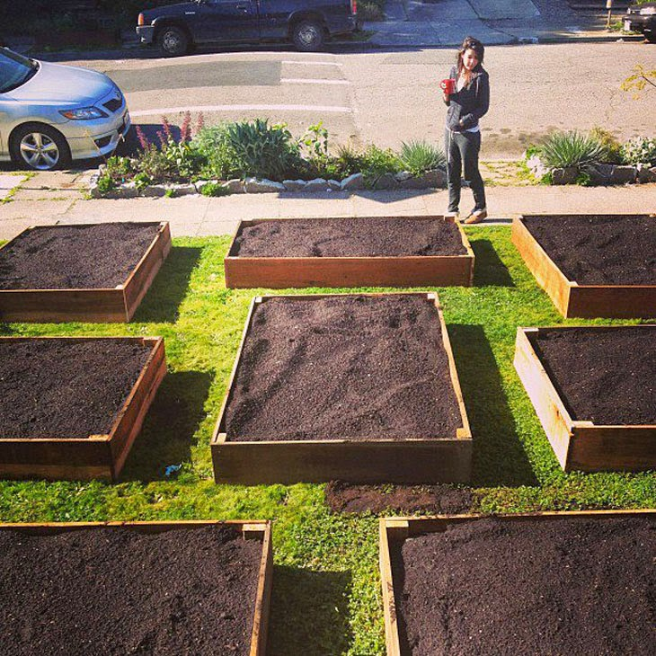 He Started With Some Boxes, 60 Days Later, The Neighbors Could Not Believe What He Built - Since the city was giving away compost for free, he got some and that's what you see in the boxes.
