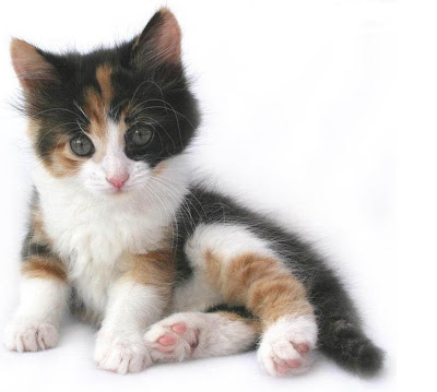 You and your new kitten, new kitten, kittens in your life, cute cat