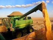 Adustina terra da agricultura