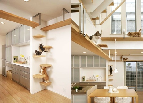 Build%2BCat%2BHouse The Best Little Cat House specializes in luxury cat only boarding and ...