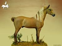 American Morgan Horse - Idano