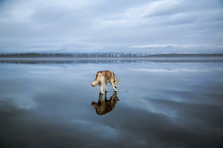 Husky Fotoğraflari