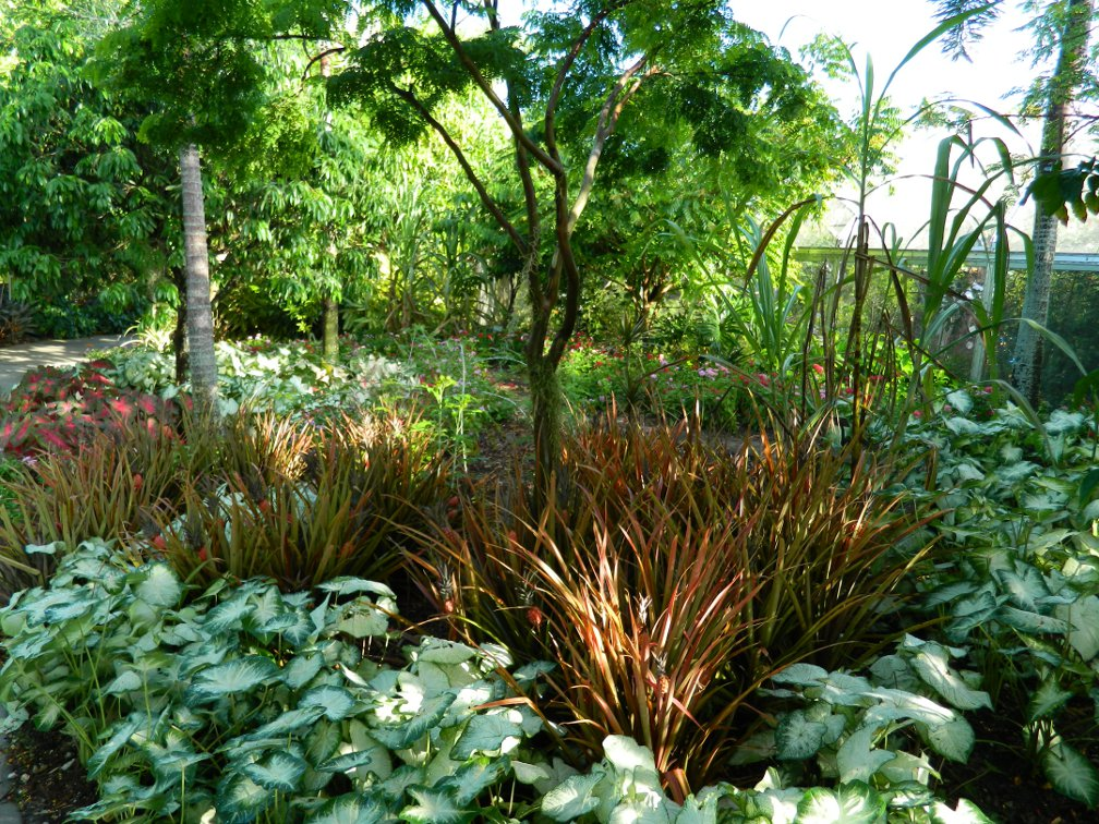 Massed caladiums pineapples Brazilian Garden Naples Botanical Garden by garden muses-a Toronto gardening blog