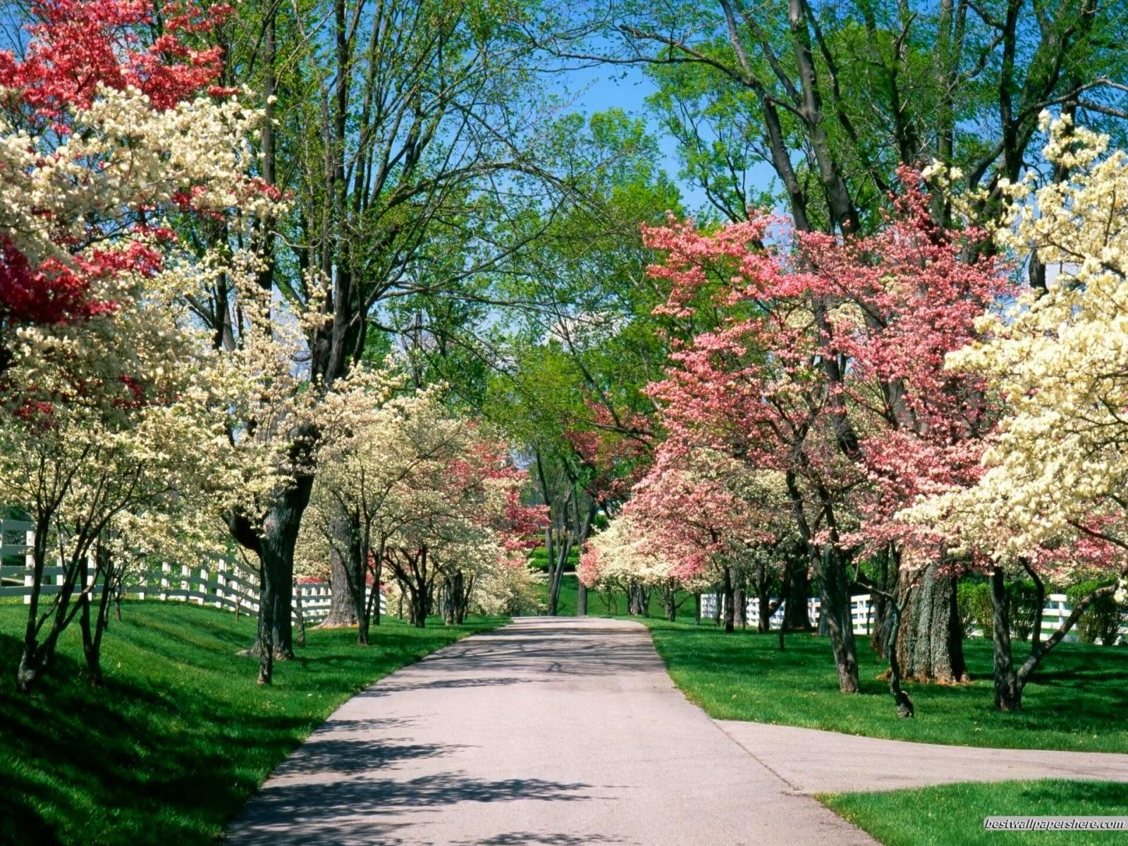 Beautiful Nature Spring Season
