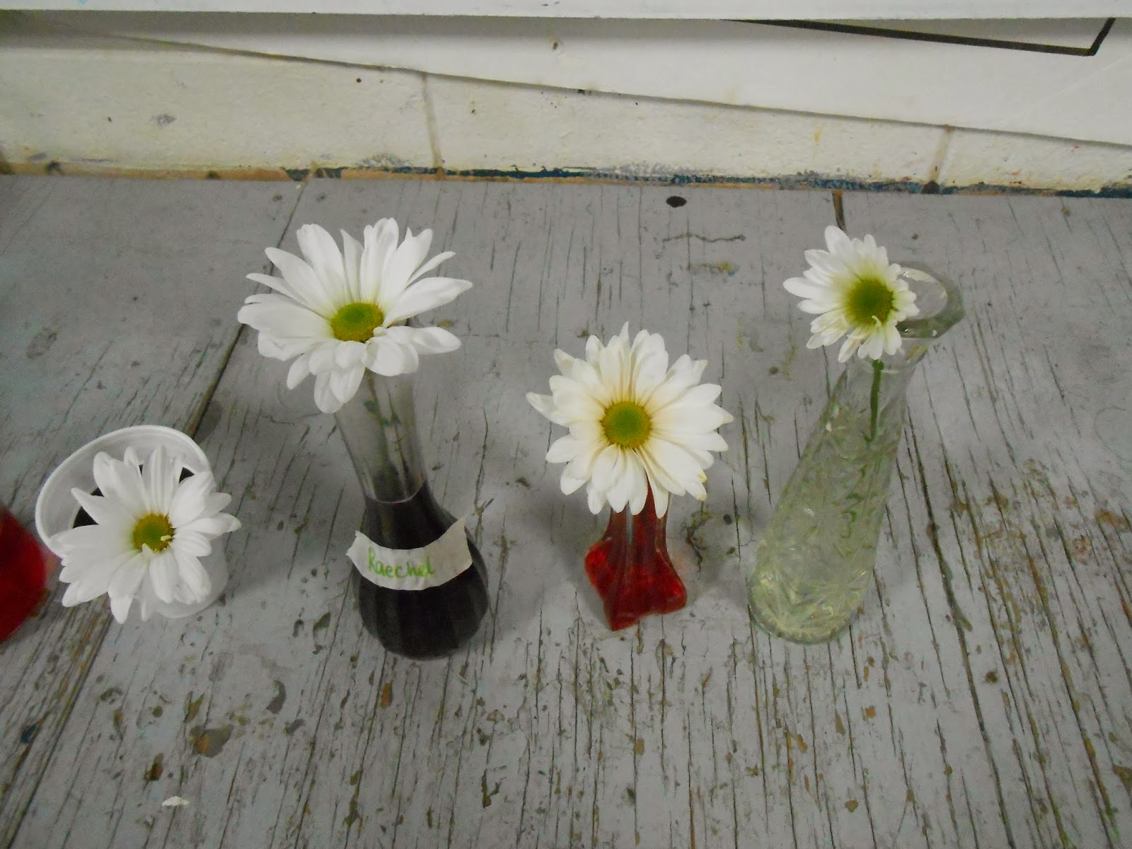 Elg Agriculture Classes Crazy Daisy Experiment