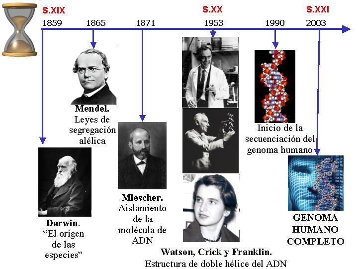 Intro2res biolog a molecular b sica en investigaci n for En 2003 se completo la secuenciacion del humano