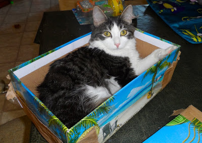 Purrty Boy Anakin relaxing in a box :) Ani The Two Legged Cat