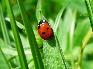 Ladybug on the Ecosystem