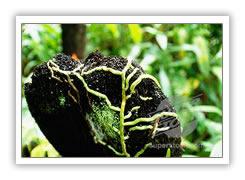 Kitulgala Rainforest
