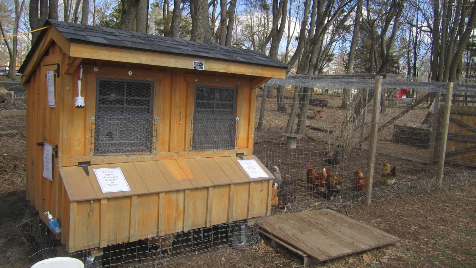 Chickens at Princeton Day School | Princeton Nature Notes