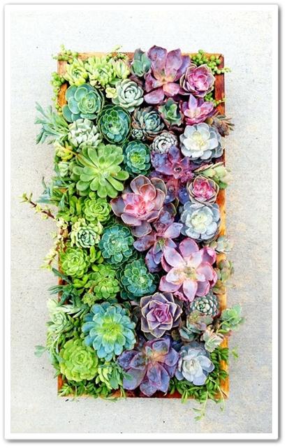 vertical succulents, succulent art, succulnter, vertikala succulenter
