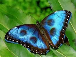 que-numero-jugar-en-la-loteria-si-sueño-con-mariposa