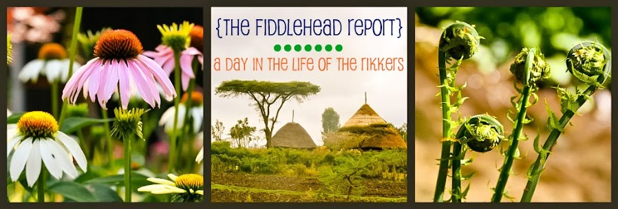 the fiddlehead report...a day in the life of the Rikkers