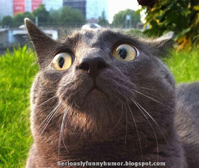 Surprised big-eyed cute cat