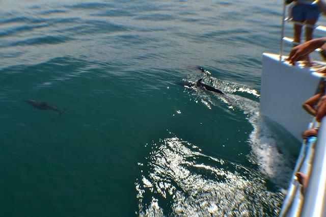 http://www.costaricaholidayrentals.com/tour/manuel-antonio-catamaran-tour-36