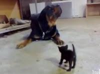gato vs perro