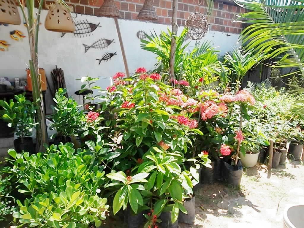 Plantão Apodi Arteplantas  A loja de plantas de Apodi