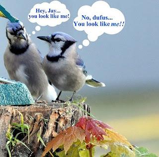 Funny Bird Pic