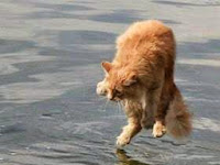 Mengapa Kucing Takut Air?