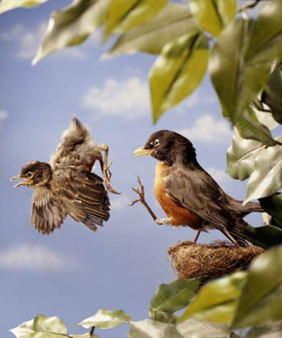 Life is a Journey: Pushing Baby Birds Out Of My Nest...
