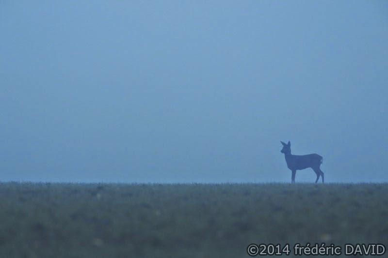 animaux chevreuil champ brouillard silhouette