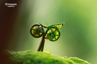 bike riding mantis optical illusion