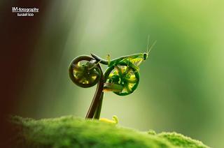 bike riding mantis optical illusion