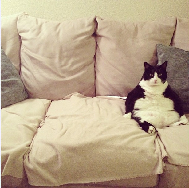 Сумасшедшие коты, фото 14