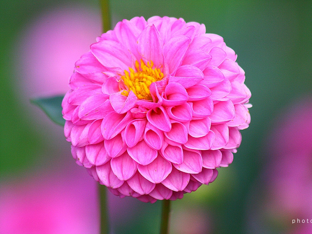 Lines Across Felt Dahlia Flowers