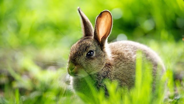 Cute Rabbit Grass HD Wallpaper