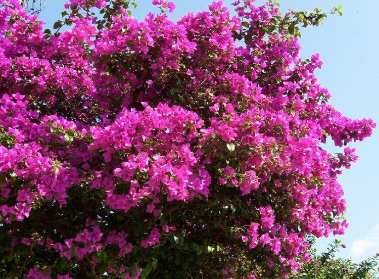 flores jardim primavera:Jardim da Terra: DICA DO DIA: Como ter um Jardim Florido o Ano Todo