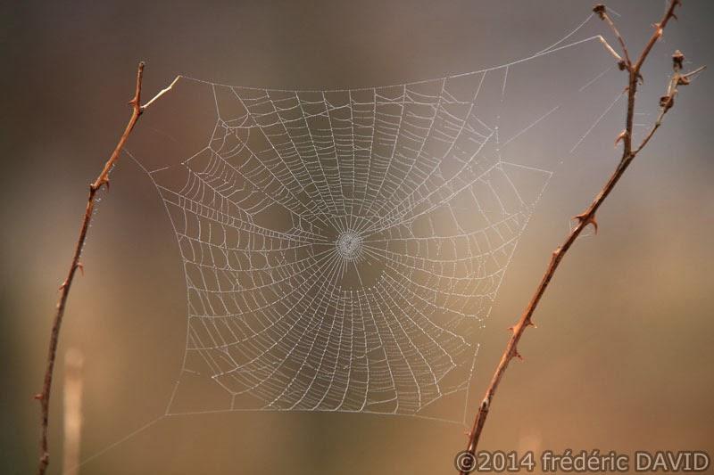 nature végétation toile araignée macro forêt Fontainebleau Seine-et-Marne