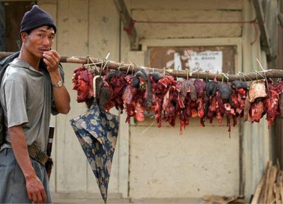 China Cannibalism