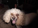 My Adorable Dog!!