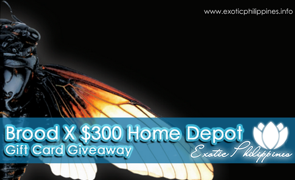 Brood X $300 Home Depot Gift Card Giveaway