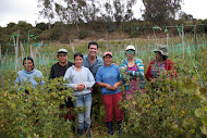 Visiting with Organic Goldenberry Farmers in Colombia