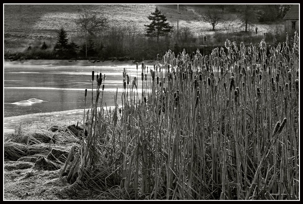 Nova Scotia; Indian Path; Ice; Ice Crystals; Frost; Grass; Inlet