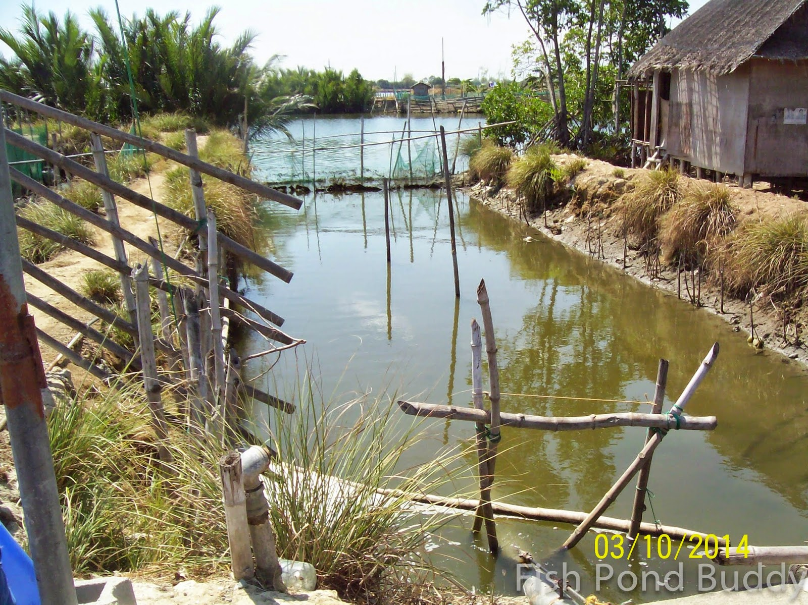 Fish pond buddy features of a class a bangus pond for Fish pond supplies near me