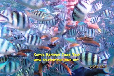 sekumpulan ikan kecil di menjangan kecil karimunjawa